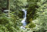 Fototapeta Waterfall in Spring   00279   366 x 254 cm
