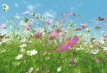 Fototapeta  Flower Meadow   00281   366 x 254 cm